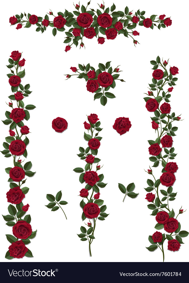 Set brushes flowers climbing red roses vector