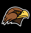 eagle the head of a bird of prey vector image