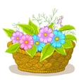 basket with flowers cosmos vector image