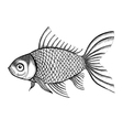 fish painted in a graphic style points and lines vector image