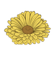 daisy flower isolated on white background vector image