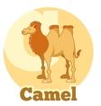 ABC Cartoon Camel2 vector image