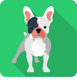 dog French bulldog icon flat design vector image
