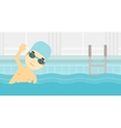 Man swimming in pool vector image