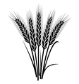 bunch of wheat ears vector image vector image