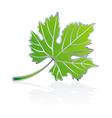 icon vine leave vector image vector image