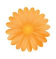 orange flower on white background vector image vector image