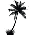 Palm tree design vector image