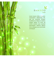 Background with green bamboo vector image vector image