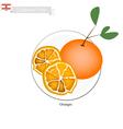 Fresh Orange A Famous Fruit in Lebanon vector image