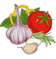 composition with ripe vegetables and herbs vector image
