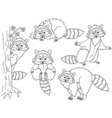 Raccoon Set vector image vector image
