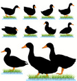 ducks set vector image