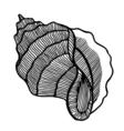 black sea cockleshell vector image
