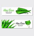aloe vera hand drawn banner natural vector image