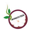 mangosteen fruit icons flat style vector image