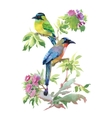 Watercolor colorful Birds with leaves and flowers vector image
