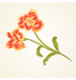 lily alstroemeria stem flower and leaves closeup vector image