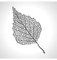 Black macro leaf of birch tree isolated vector image