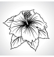 Black macro chinese rose flowers isolated vector image