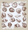 seashells big set hand drawn vintage sketch vector image