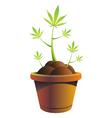 cannabis pot vector illustration vector image
