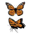 Monarch butterflys vector image