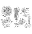 sketches of vegetarian vegetables food theme vector image
