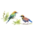 Watercolor colorful Birds on branches with green vector image
