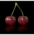 red cherry isolated on black background vector image