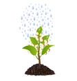 Money plant with rain drops vector image vector image