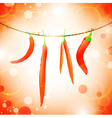 hot peppers vector image vector image