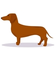 Haired dachshund vector image