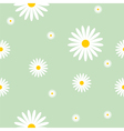 Camomile background vector image