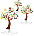apple trees vector image vector image