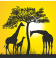 Giraffes on the African savannah vector image vector image