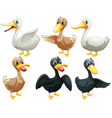 Ducks and geese vector image