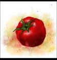 tomat aquarel vector image