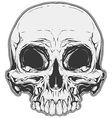 Realistic white and grey human skull tattoo vector image