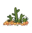 cactus succulentes and stones vector image