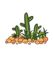 cactus succulentes and stones vector image