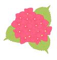 flower hydrangea isolated on white background vector image
