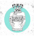 retro hipster animal dog dressed in pullover vector image
