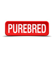 Purebred red 3d square button isolated on white vector image