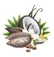 Watercolor cocoa fruit coconut and vanilla vector image