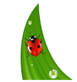 Ladybird On Grass vector image vector image