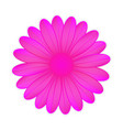 pink flower on white background vector image