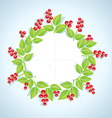 Berry plant vector image