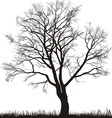 walnut tree in winter vector image vector image