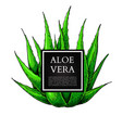 aloe vera with frame hand vector image